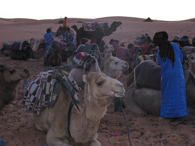 Our camels waiting to take us back to civilization