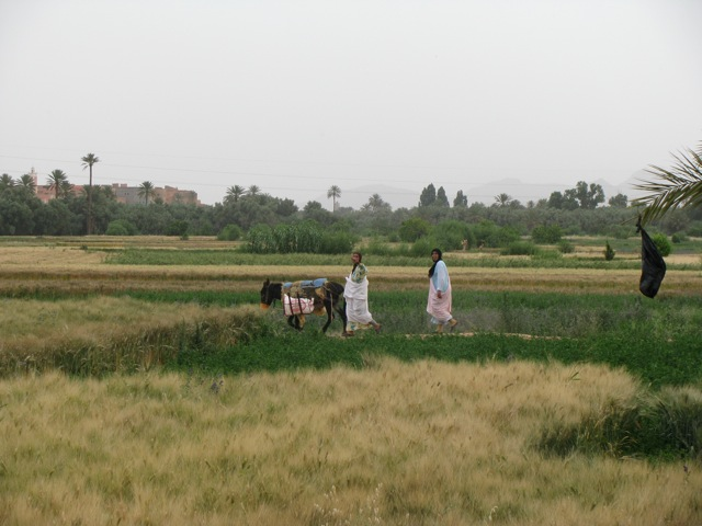 The wheat fields around Tinghir