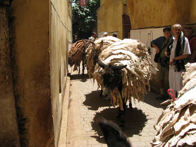 Donkeys working in the medina in Fes